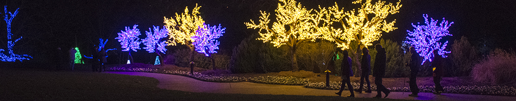 Cheekwood Botanical Garden Light Show Master Plan