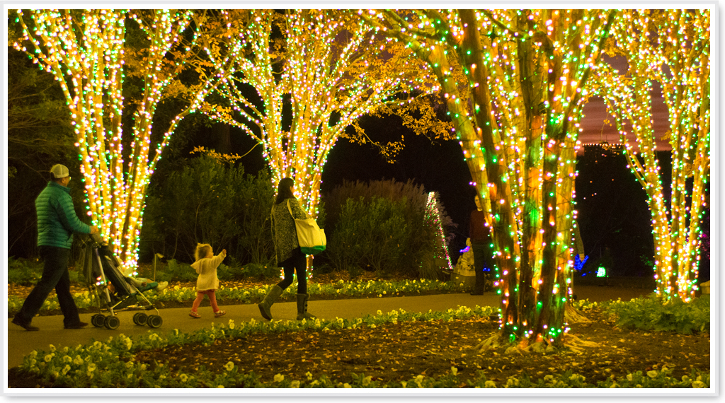 Cheekwood Botanical Garden Holiday Lights